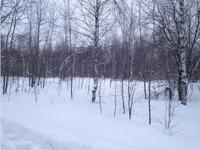 Продажа земли промназначения Горьковское шоссе, Павловский Посад, 65 км от МКАД. 4,84 Га.